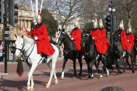 Horse guard LR 031909