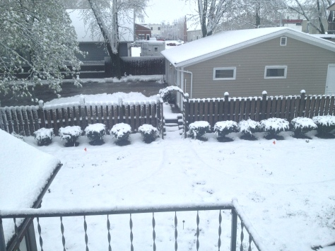 How our backyard looked this morning.