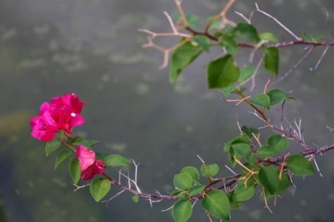 2013 07 25 McNay Flower1
