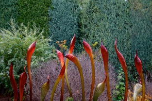 Chihuly 042
