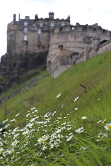 Wild daisies on castle hill with Edinburgh Castle in the background.