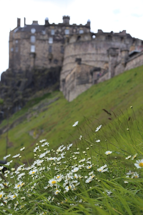 Daisies on Castle Hill Edinburgh