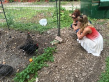 Taylor introduced us to the laying hens