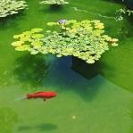 mcnay courtyard fish