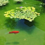 mcnay courtyard fish