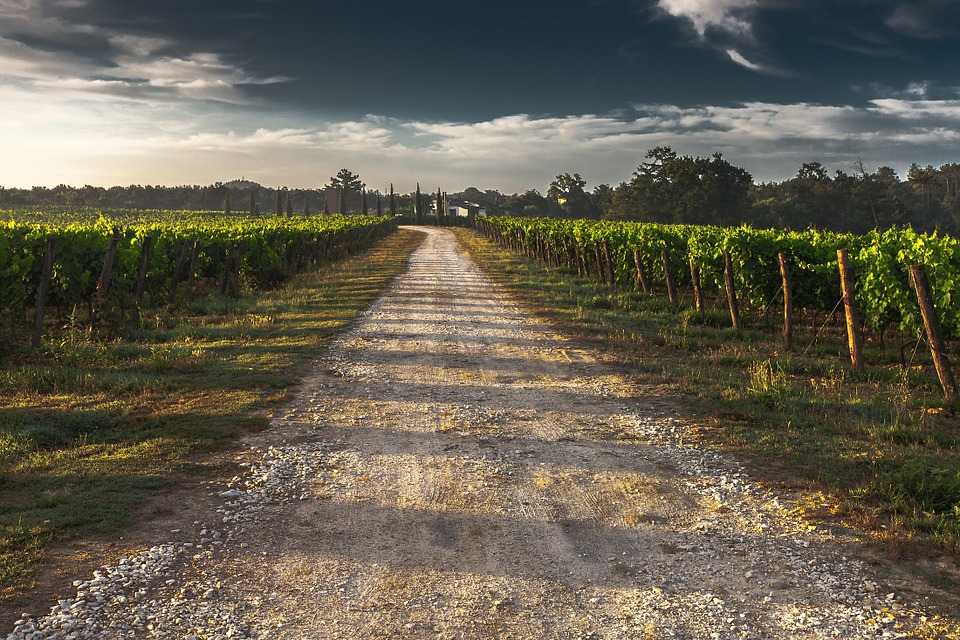 road through grape vineyard