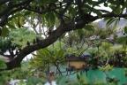 kauai-day-2-1