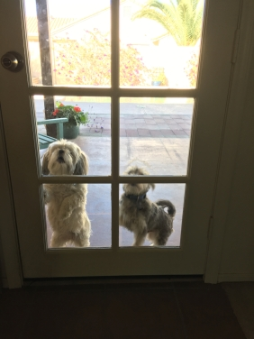 2017-01-palm-springs-w-kevin-and-linda-13