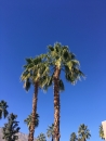 2017-01-palm-springs-w-kevin-and-linda-4